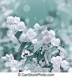 Jasmine Flower - Photo of the Jasmine Flower Blossom in ...