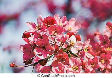 Spring Cherry Flower Blossom