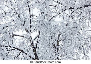 Photo of tree with branches under the snow in winter