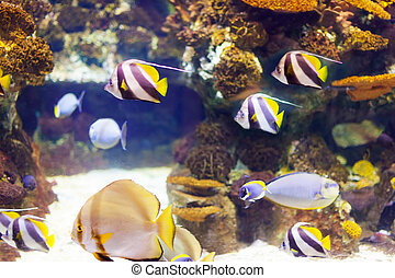 tropical fish at coral reef area in sea water