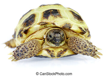 Photo of turtle on a white background