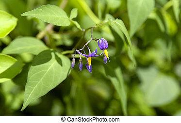 Wildflowers - Photo of Wildflowers