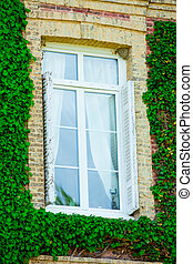 photo of window covered with plants