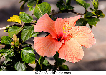 Photo Picture of Beautiful Blooming Flower Background