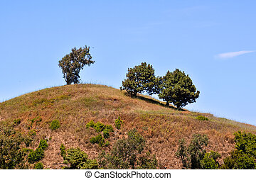 Trees on the Mountain Top