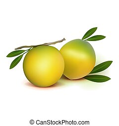 Photo realistic 3d vector abiu caimito fruit with leaves isolated on white background. Vector illustration.