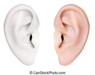 photo-realistic, ear., vector., isolerat, mänsklig, vit