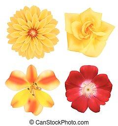 photo-realistic, flowers., ensemble, vecteur, illustration