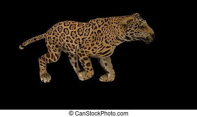 Photo-realistic Looping Jaguar Animation. Alpha Matte. 3d...