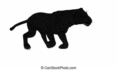 Photo-realistic Looping Panther Animation. Alpha Matte. 3d...