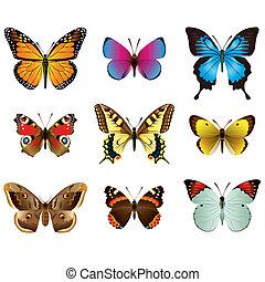 photo-realistic, mariposas, vector, conjunto