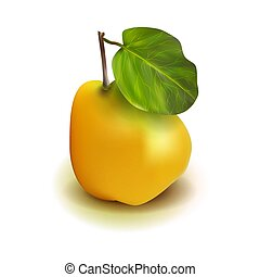 Photo realistic quince apple pear 3d vector fruit with leaves isolated on white background. Cydonia oblonga in the family Rosaceae.