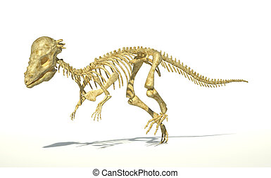 photo-realistic, squelette, entiers, correct., pachycephalosaurus, scientifiquement, coupure, dinosaure, arrière-plan., blanc, perspective, included., sentier, ombre, goutte, vue.