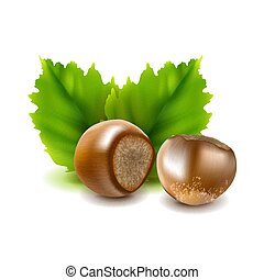 Photo-realistic vector illustration. Hazelnuts Filberts with leaves.