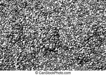 Photo shell texture on the beach