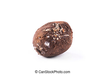 Photo spoiled potatoes isolated on white background. Bad...