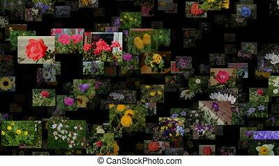 Photo stream of flowers moving IN, seamless loop