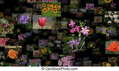 Photo stream of flowers moving LEFT, seamless loop