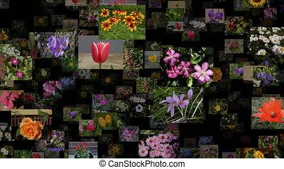 Photo stream of flowers moving LEFT, seamless loop