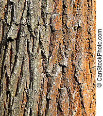 Photo texture of an old tree