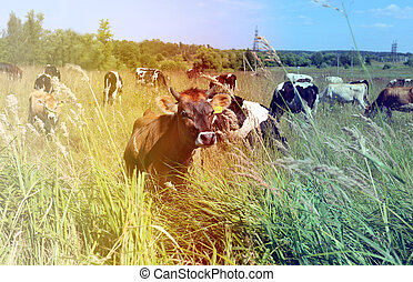 Photo with the cows
