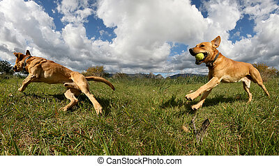 dog playing - photograph of a dog playing in the field