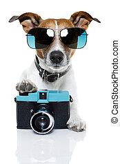 photographe, chien
