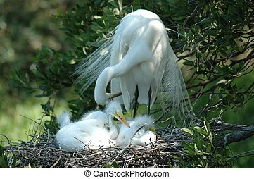 Heron and her babie - Photographed Heron and her babies, St...