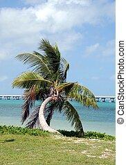 palm tree - photographed palm tree at Key West Florida