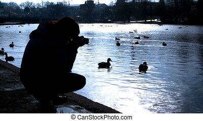 Photographer and ducks  - Photographer and ducks