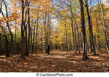 Photographer in the autumn forest