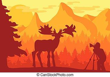 Photographer photographs deer in nature