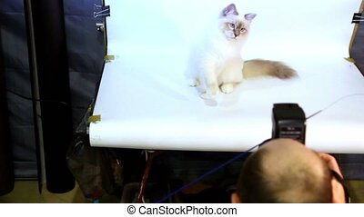 Photographer work with cat on white background in studio