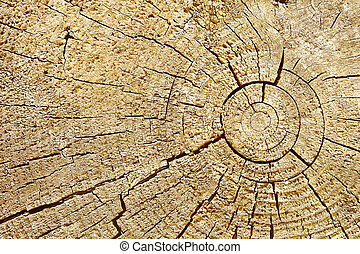 Photographic background - cut surface of wood log with cracks