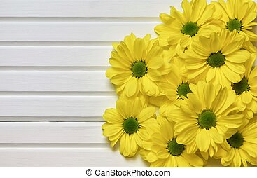 photographic image of bright yellow daisy flowers on white wood panel background