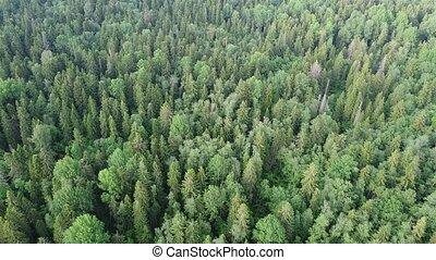 photographie, aérien, 4, vue, au-dessus, forêt, vidéo, vert