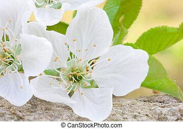 photographie, fleur, vibrant, haut, couleurs, fin, fleurs