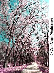 photographie, infrarouge