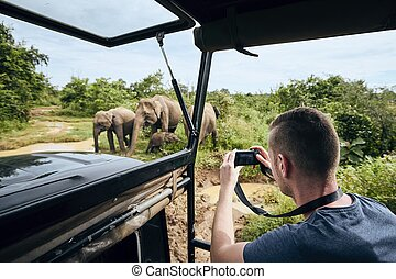 Photographing of group of elephants