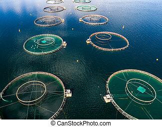 photography., 航空写真, 農場, 鮭, fpv, 無人機, 釣り