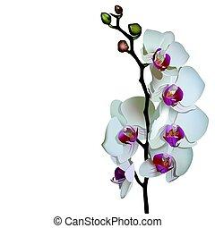 Photorealistic illustration of phalaenopsis.