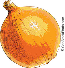 onion - photorealistic, vector, traced illustration of onion