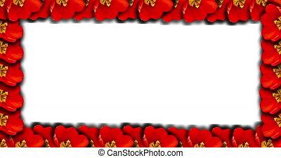 photos, contour, text., rose, tulipe, défaillance, ou, frame...