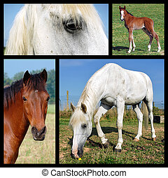 photos, mosaïque, de, chevaux