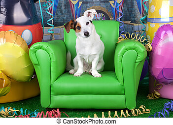 Photos of carnival with a Jack Russell on a green armchair