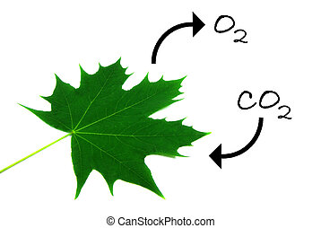 Photosynthesis 1 - Illustration of the natural process of...