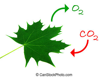 Photosynthesis 2 - Illustration of the natural process of...