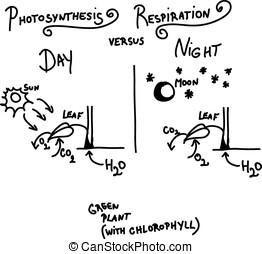 photosynthesis, ademhaling