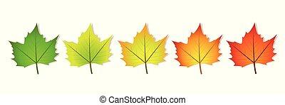 photosynthesis, bladeren, vijf, coloful