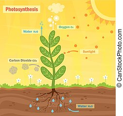 Colorful illustration of the photosynthesis process. Eps10